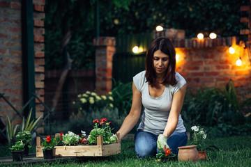 senior woman planting seedlings in her garden. evening scene