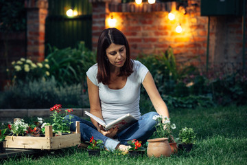 woman preparing seedlings for transplanting in her garden. evening scene