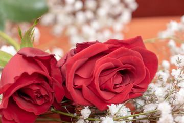 Plan rapproché deux roses rouges et fleurs blanche de gypsophile pour la saint valentin et déclaration d'amour