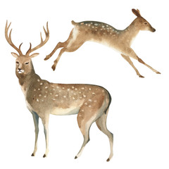 Watercolor set of a brown stag stands and a female deer jumps. Splashes sketch of wild forest north animals.