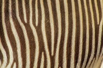 natural zebra pattern stripes