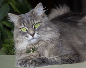 Portrait of beautiful kitty with green eyes