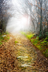 path in misty forest