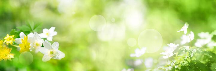 Fototapeta Green spring scenery_001