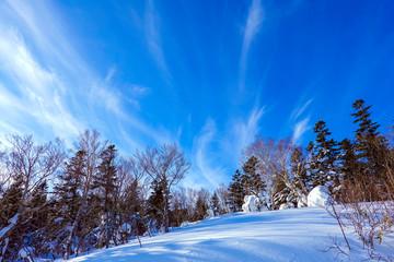 森と雪景色