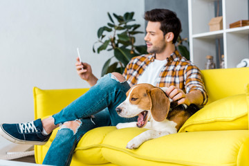 selective focus of yawning beagle dog and man with smartphone
