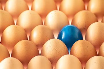 A blue egg in plenty eggs