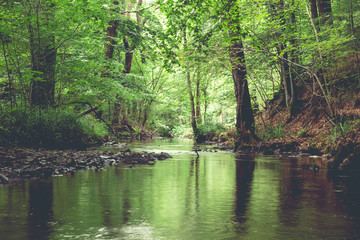 A river crossing across a green forest