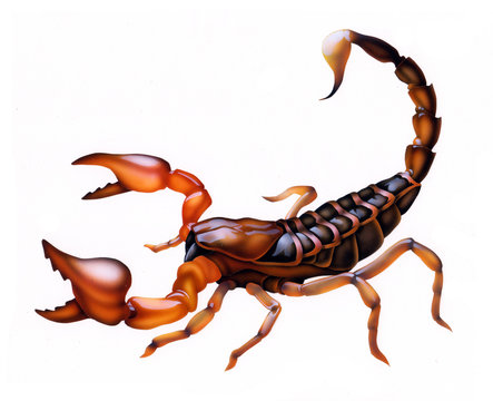 scorpion in a fighting position, tattoo theme, zodiac sign
