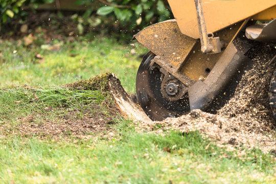 Stump grinder in action, close up