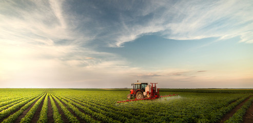 Tractor spraying pesticides at  soy bean field