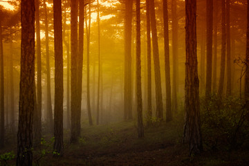 misty forest at sunrise time