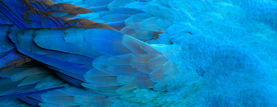 Parrot feathers blue exotic texture