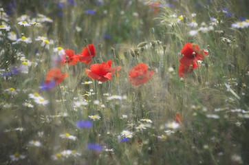 Schowane w trawie