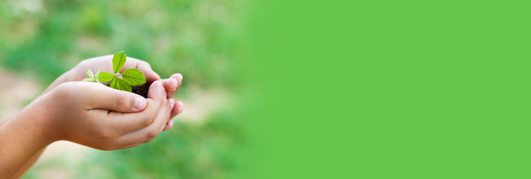 Banner of plant in hands - grass background . Green world.