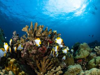 Deurstickers Onder water Christmas Island Underwater