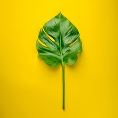 Tropical monstera leaves on yellow background, top view