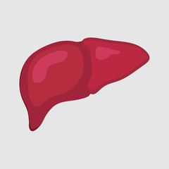 lustration of healthy liver, human body, health medicine