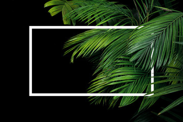 Tropical palm leaves rainforest plant bush nature backdrop with white frame lay out on black background.