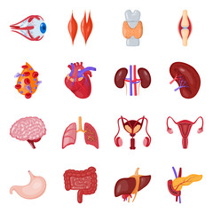 Isolated object of anatomy and organ sign. Set of anatomy and medical stock symbol for web.