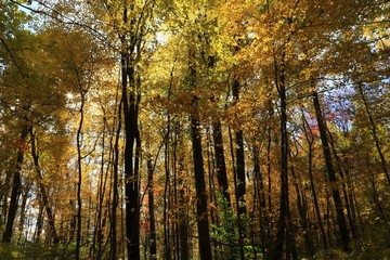 Colorful fall season in the forest