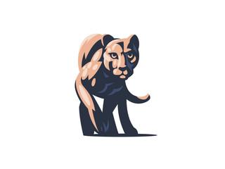 Puma or lioness