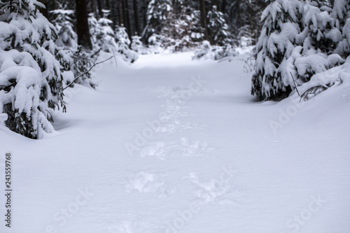 Winter Scenes - Unpaved winter forest road under a layer of fresh