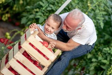 Grandpa and grandson workking in garden