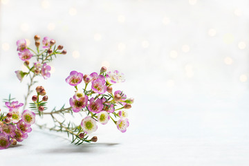 Branch of small flowers white background bokeh