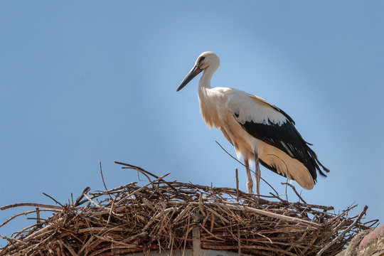 Stork in the Ecomuseumm of Mulhouse in Alsace France