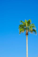Palm tree under a blue sky