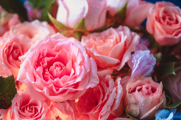 Peony roses and small flowers with an inner glow. Beautiful flower background close-up
