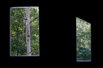 Forrest through windows