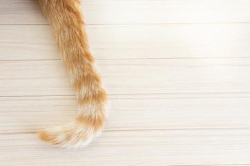 猫のしっぽ Wall mural