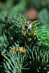 Gold wedding rings with diamonds of the bride and groom, close-up