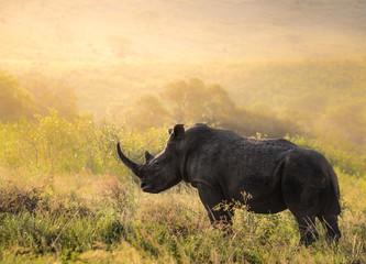 Zelfklevend Fotobehang Neushoorn Breitmaul Nashorn Bulle in Südafrika