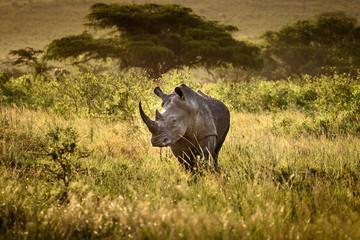 Foto op Aluminium Neushoorn Breitmaul Nashorn in Hluhluwe-iMfolozi, Südafrika