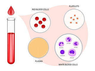 Composition of blood diagram vector