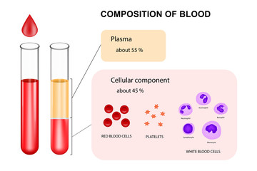 Infographic composition of blood concept