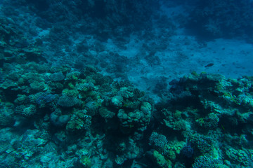 Beautiful underwater coral reef with tropical fish in red sea
