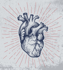 Human heart in engraving technique with star rays on grunge background. Anatomically correct hand drawn line art. Tattoo, tee shirt print design. Vector illustration.
