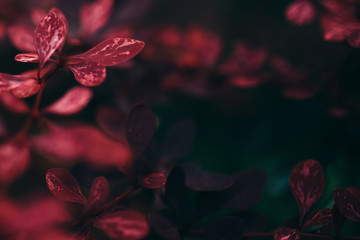 Dunkle Rote Blätter Hintergrundbild