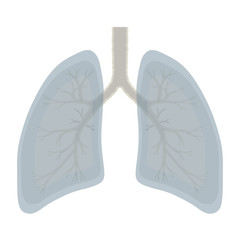 Human Lung anatomy illustration . Illness respiratory cancer gra
