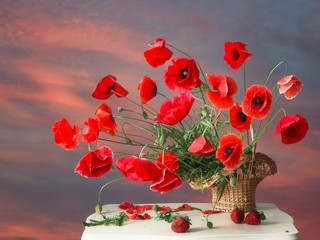 Still life with bouquet of red poppies