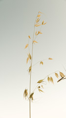 Isolated Ornamental Plant