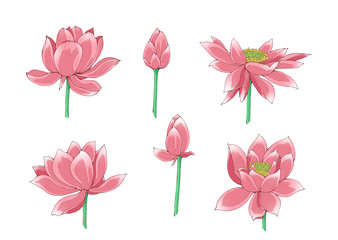 Illustration of lotus flowers, isolated.