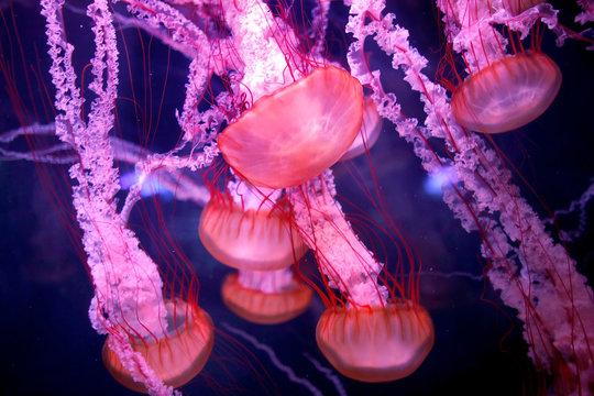 Jellyfish are seen in a new aquarium dedicated to 45 different delicate species at the Paris Aquarium