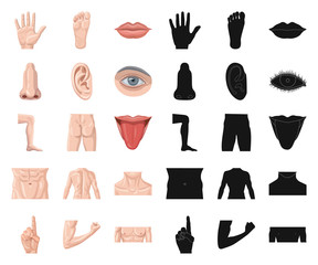 Isolated object of human and part sign. Set of human and woman vector icon for stock.