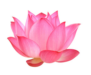 Lotus flower on white background