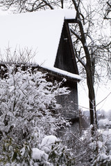 Snowy barn - winter landscape - snow on bushes, rose hips around the Christmas